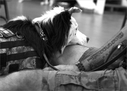 """""""Every night when we go to bed he does a check-in. Before I go to sleep he sits right next to me, he lays across my chest and makes sure I'm okay to go to sleep. When I wake up now, he's right there."""" US Navy veteran Dave Jennelle and his service dog Laddie."""