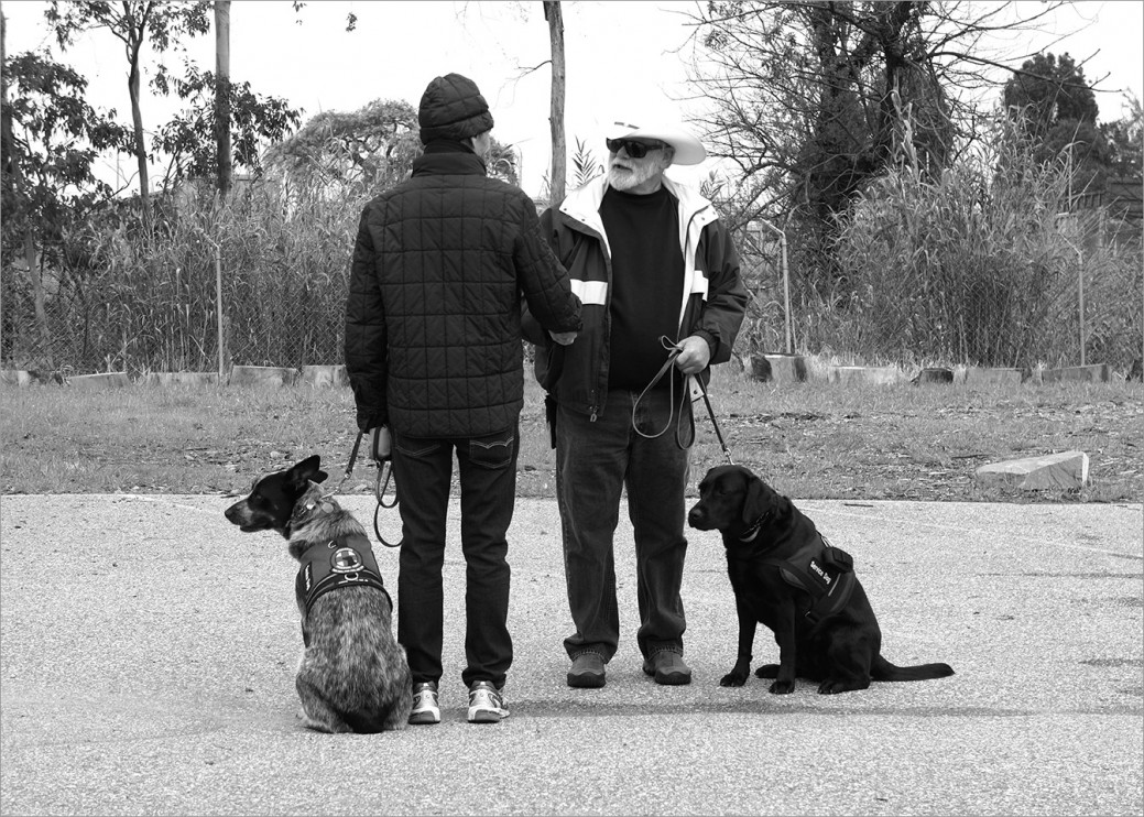 Vietnam Veterans, with their service dogs, meeting one another at class. There are several Vietnam Vets with service dogs at Operation Freedom Paws and even though their training is completed, many still attend class and help mentor some of the new, younger veterans.