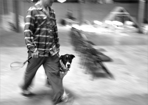 US Veteran and his service dog moving through a quick-paced exercise during training class.