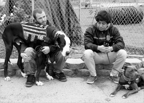 Two veterans, a soldier and a Marine, on a break from service dog training. There is a connection and camaraderie between the two servicemen as they have shared experiences in war. Quiet time with their dogs is comforting and helps keep them focused in the moment.