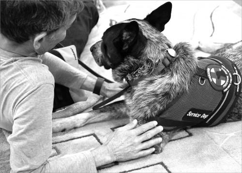 """US Army veteran Steve Loy served in the Vietnam War. He was """"welcomed home"""" to jeers and name calling, like so many other Vietnam Vets. For years he lived with post-traumatic stress and ailments from Agent Orange before being diagnosed. His service dog Merlin and their partnership has been life changing."""