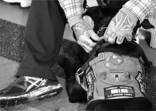 """US Marine Corps veteran Emilio Gallego adjusts the collar of his service dog Samson. They are together 24/7. Emilio is engaging more with people when they go places and he says it's good for advocating too. Many people don't understand the benefits service dogs provide for people with """"hidden wounds,"""" such as PTSD or traumatic brain injury."""